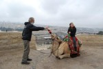 Moshe and the Camel