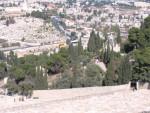 Garden of Getsemane