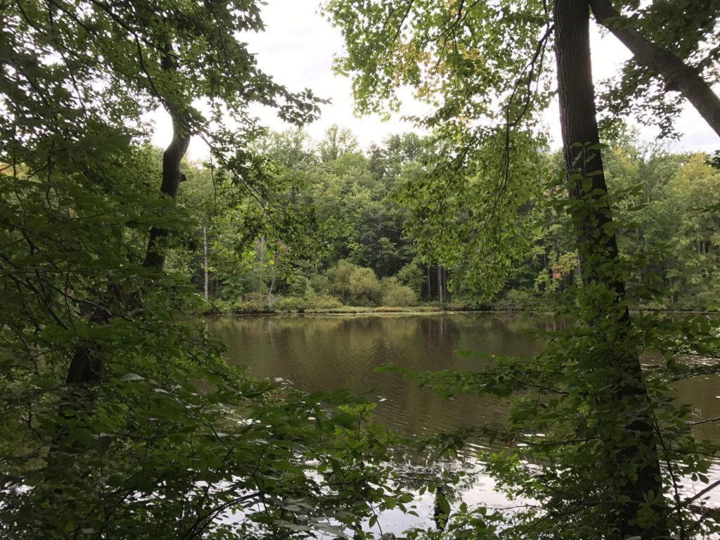 Davidson Mill Pond Park